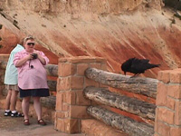 crow at Bryce